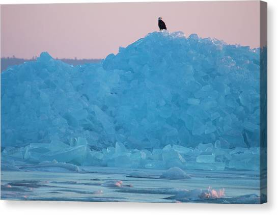 Eagle On Ice Mackinaw City 2261803 Canvas Print