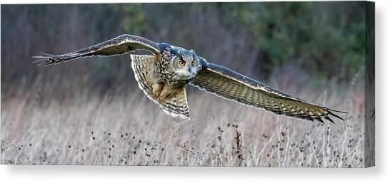 Eagle Owl Gliding Canvas Print