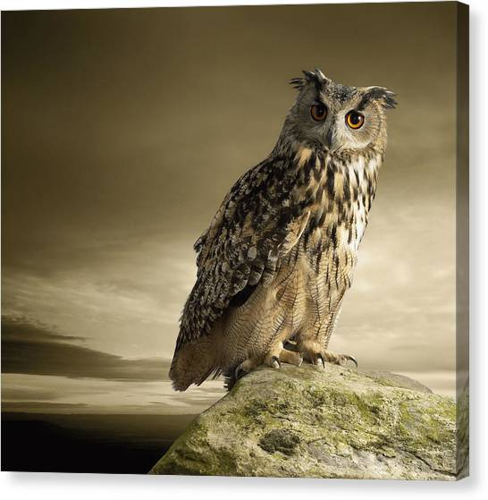 Eagle Owl Standing Full Length On A Rock Canvas Print