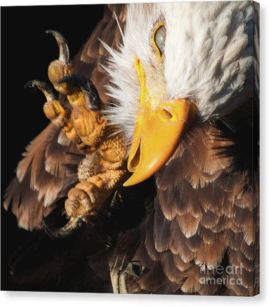Eagle Scratch Canvas Print