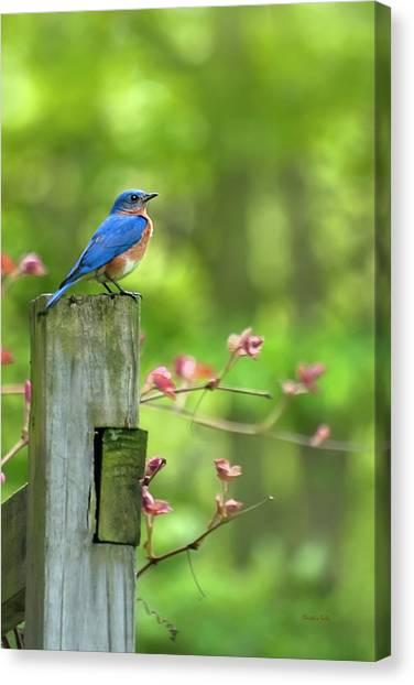 Mo Canvas Print - Eastern Bluebird by Christina Rollo