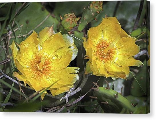 Canvas Print featuring the photograph Eastern Prickley Pear Cactus Flower On Assateague Island by Bill Swartwout Fine Art Photography
