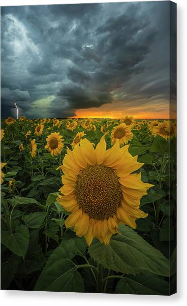 Canvas Print featuring the photograph Eccentric  by Aaron J Groen
