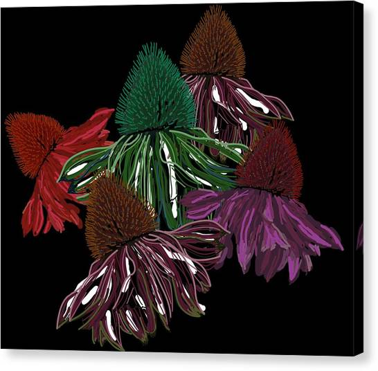 Echinacea Flowers With Black Canvas Print