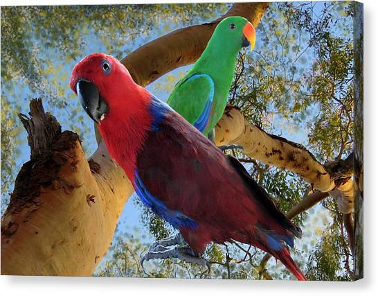 Eclectus Parrots Canvas Print