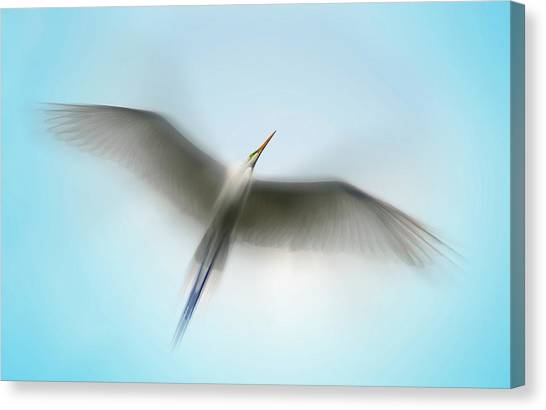 Egret In Motion Canvas Print