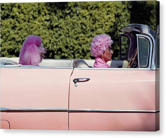 Elderly Woman And Pink Poodle In Pink Canvas Print by Tim Macpherson