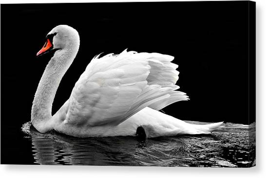 Canvas Print featuring the photograph Elegant Swan by Top Wallpapers
