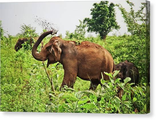 Elephant Canvas Print by Basia Asztabska