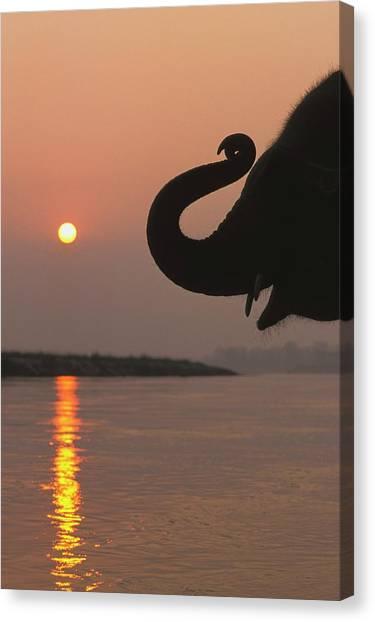 Elephant, Chitwan National Park, Nepal Canvas Print by Design Pics / Sean White