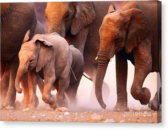 Horizontal Canvas Print - Elephant Herd On The Run In Etosha by Johan Swanepoel