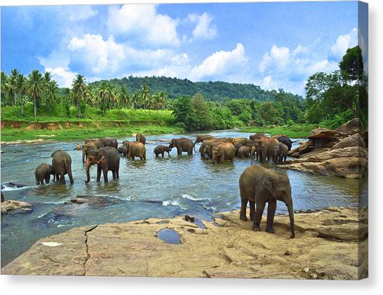 Elephants Bathing In River Canvas Print