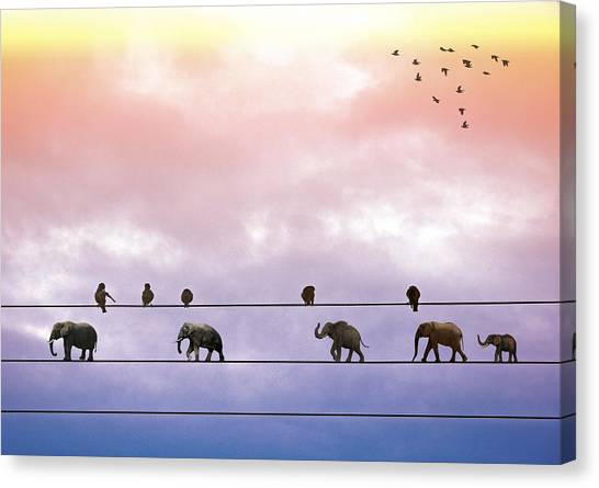 Elephants On The Wires Canvas Print