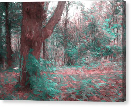 Emmaus Community Park Trail With Large Tree Canvas Print