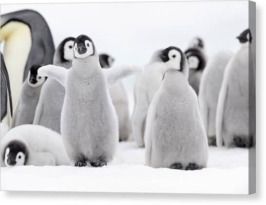 Emperor Penguin Canvas Print by Martin Ruegner