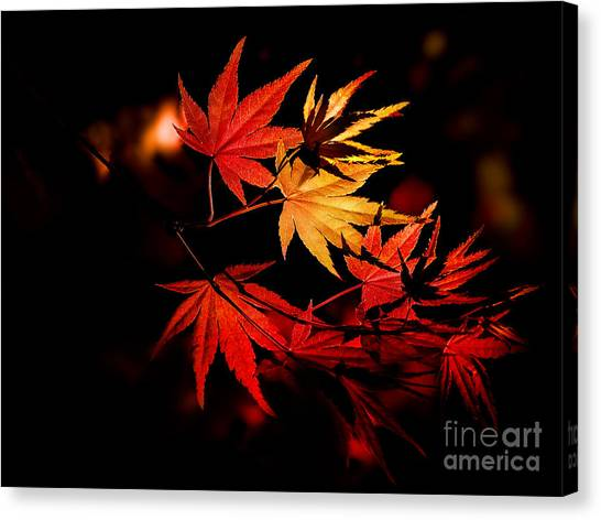 Japanese Gardens Canvas Print - Enchanting Yellow To Red Gradient On by Hibiki Nakata