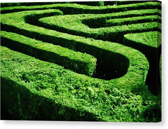 England, London, Hampton Court Maze Canvas Print
