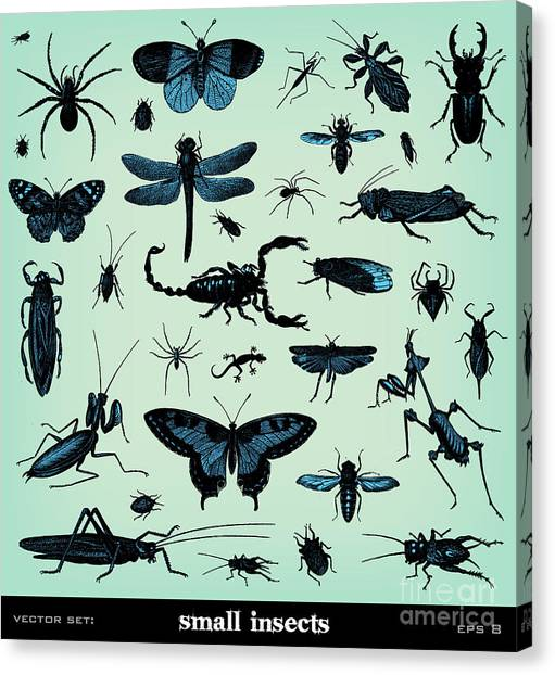 Engraving Canvas Print - Engraving Vintage Insect Set From by Pio3