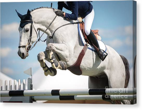 Purebred Canvas Print - Equestrian Sports, Horse Jumping, Show by Catwalkphotos