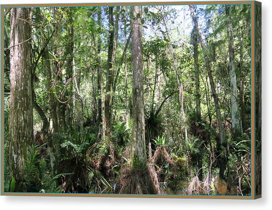 Everglades Canvas Print - Everglades Old Growth by Laurence Lawrence