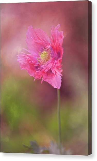 Canvas Print featuring the photograph Exquisite Appeal by Dale Kincaid