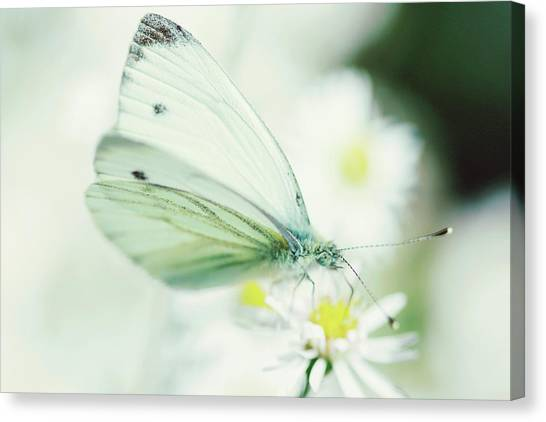 Extreme Close Up Of White Butterfly & Canvas Print by Les Hirondelles Photography