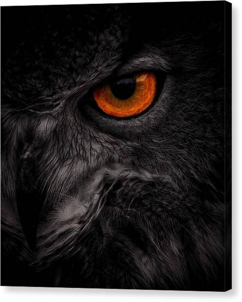 Eye See You Canvas Print