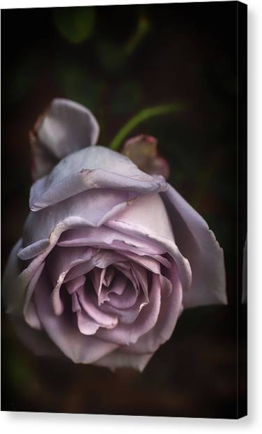 Fading Bloom Canvas Print
