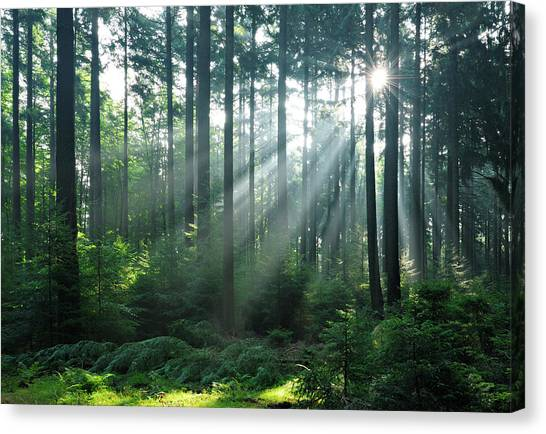 Fairytale Forest - Sunbeams In Natural Canvas Print by Avtg
