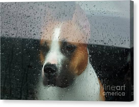 Derelict Canvas Print - Faithful Dog Sitting In A Car And by Dimedrol68