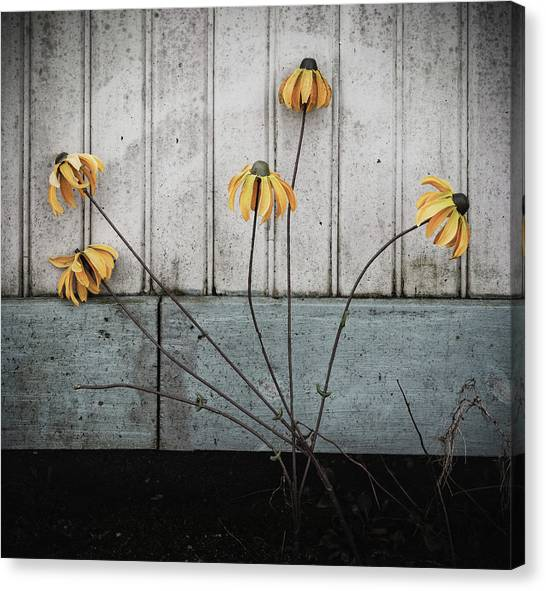 Fake Wilted Flowers Canvas Print