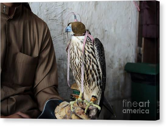 Hunt Canvas Print - Falconer With His Falcon, Used For by Ipics