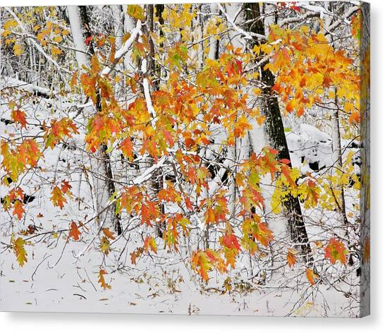 Fall And Snow Canvas Print
