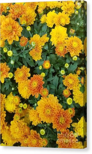 Canvas Print featuring the photograph Fall Chrysanthemums Autumn Orange by Rachel Hannah