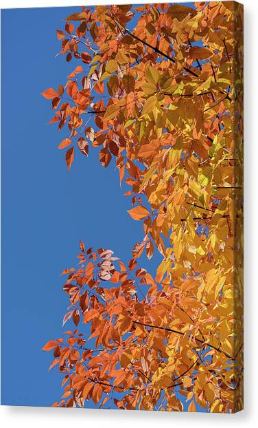 Canvas Print featuring the photograph Fall Colors by Steven Sparks