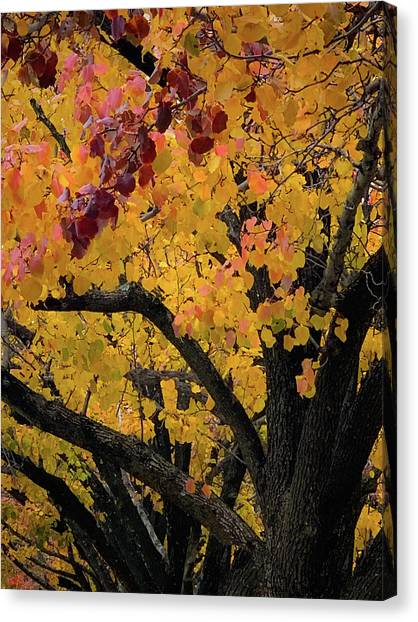 Fall In Carlyle Canvas Print