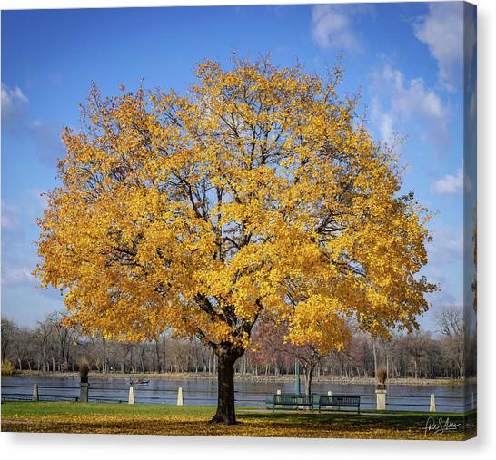 Ribeye Canvas Print - Fall Is Golden by Phil S Addis