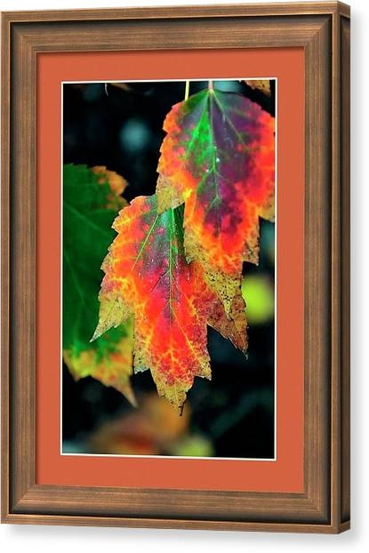 Canvas Print featuring the photograph Fall Leaves 6072 Framed by Jerry Sodorff