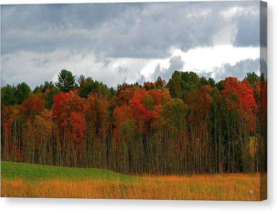Fall Trees Off Rte 23a Canvas Print