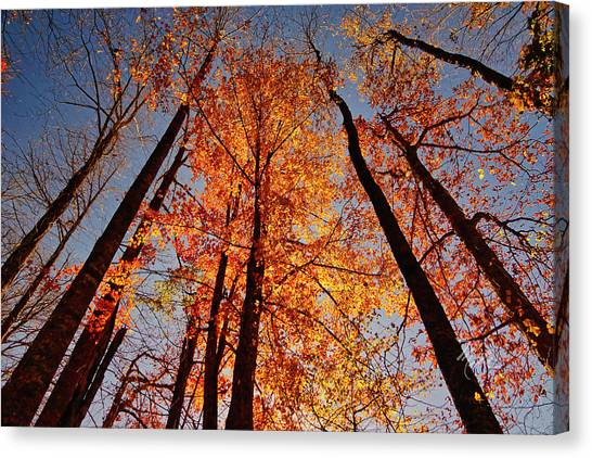 Fall Trees Sky Canvas Print