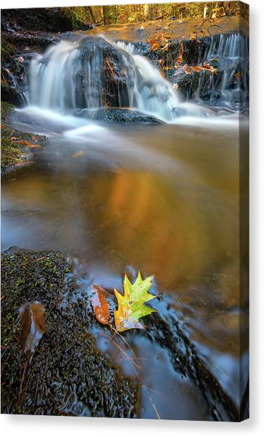 Canvas Print featuring the photograph Fallen Oak Leaf In Vaughan Woods by Rick Berk