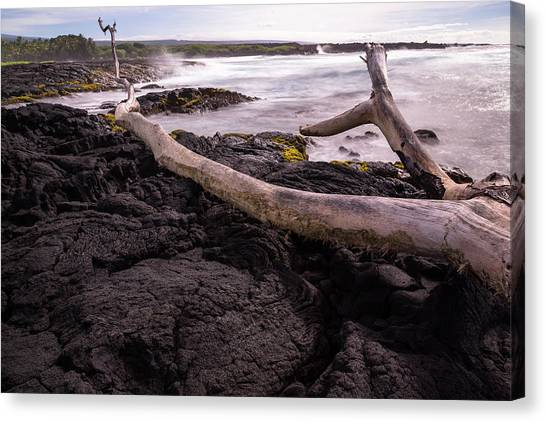 Fallen Tree At Punalu'u Beach Canvas Print