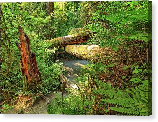 Fallen Trees In The Hoh Rain Forest Canvas Print