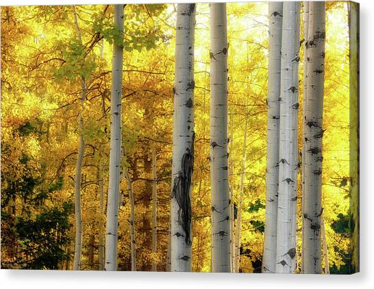 Fall's Visitation Canvas Print