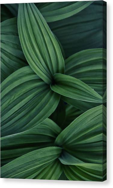 Canvas Print featuring the photograph False Hellebore Plant Abstract by Nathan Bush