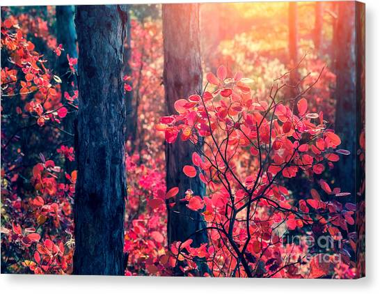Woodland Canvas Print - Fantastic Forest With Cotinus by Creative Travel Projects