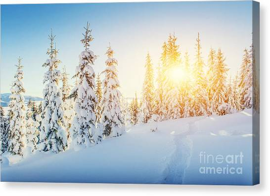 Hoarfrost Canvas Print - Fantastic Winter Landscape And Worn by Standret