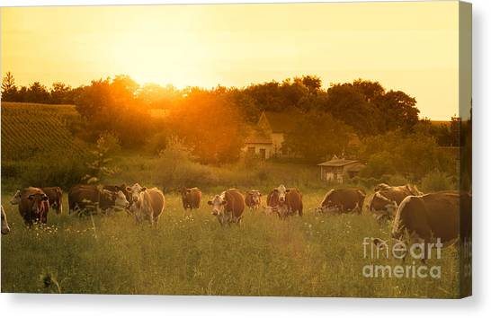 Farmland Canvas Print - Farmland Summer Scene In Sunset by Dark Moon Pictures