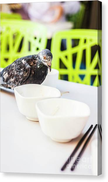 Pest Canvas Print - Fast Food Asian Pigeon by Jorgo Photography - Wall Art Gallery