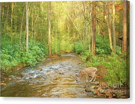 White-tailed Deer Canvas Print - Fawn Drinking From Stream by Laura D Young